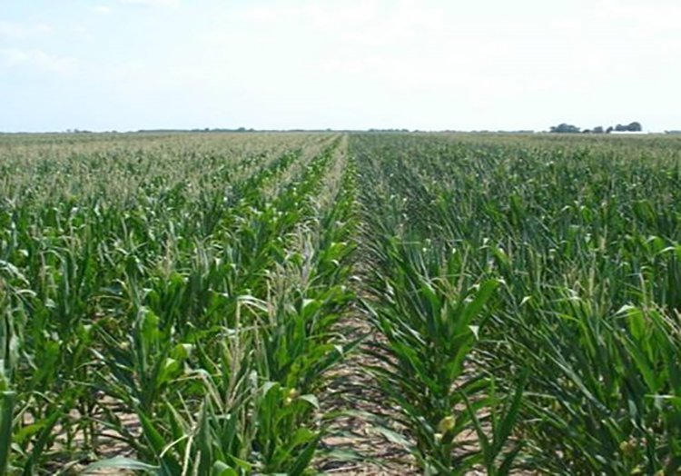 Agrisure Artesian See the Difference.