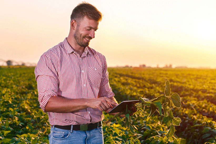 A man standing in a field of crops and looking at a tablet.