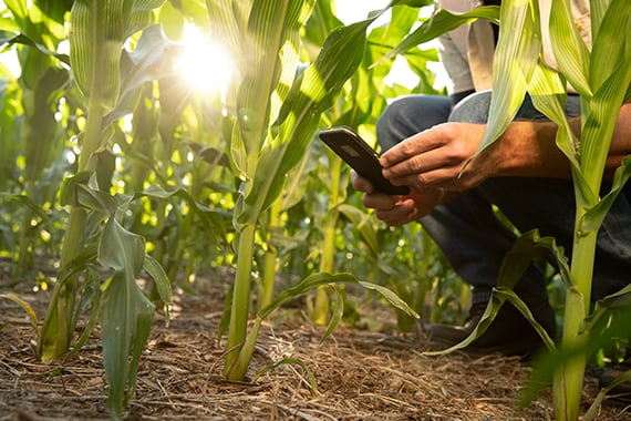 A Leader in Seed Technology