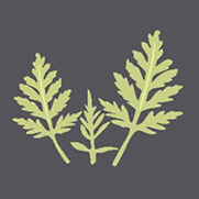 Icon Common Ragweed