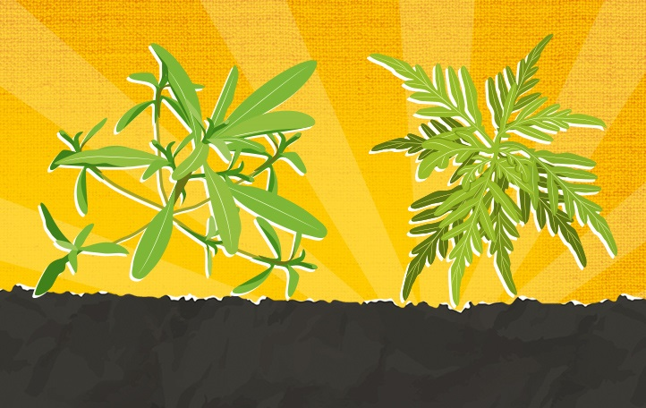 Two illustrated weeds with a background of a rising sun.