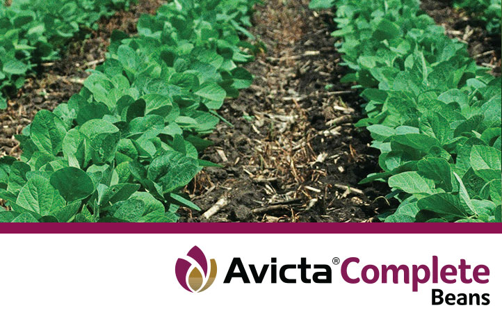 Avicta Complete Soybeans