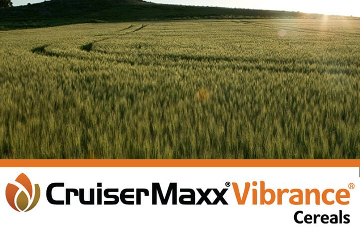 Image result for cruiser max seed treatment