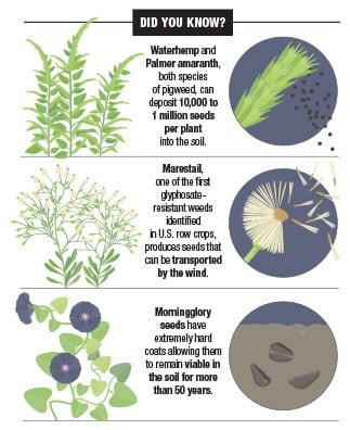 Weed Control Requires a Multifaceted Approach