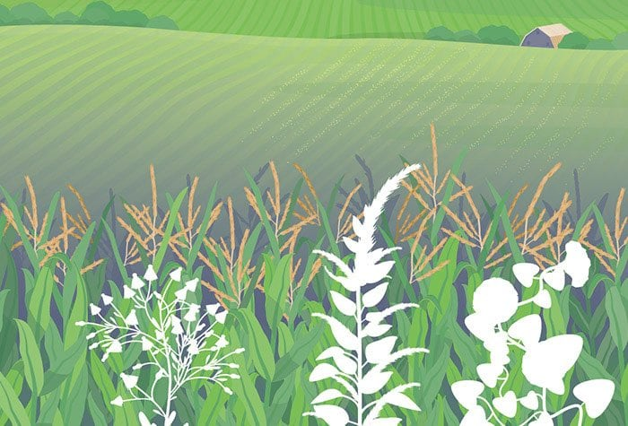 Weed Control Requires A Multifaceted Approach Syngenta Thrive