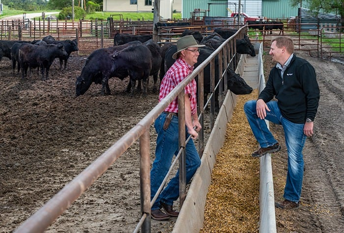 Enogen Energizes Feed for Cattle | Syngenta Thrive